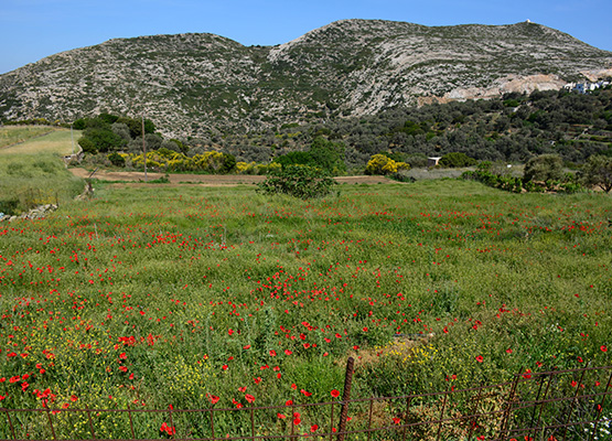 Town plan plots, which can build houses, hotels or residential properties. In a short distance to Naxos Town and to the beautiful sandy beaches